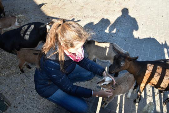 Het gezinsleven - Dierentuin - Dierenrijk Europa2